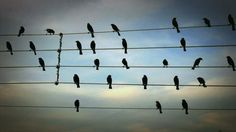 Birds on the Wires on Vimeo; photo of birds on telephone wire set to music. Anne Lamott, Bird Perch, Gif Of The Day, No Photoshop, Markiplier, Music Notes, Bird Feathers, Make Me Smile, Musicals