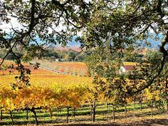 Napa Valley, California - get great tips for a visit on our blog: http://www.ytravelblog.com/napa-valley-california/
