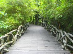 Yanoda China Park Rainforest Forest T