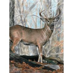 """Royal Brush Color Pencil By Number Kit 8.75""""X11.75""""-Whitetail Buck - whitetail buck"""