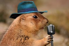 Singing Prairie Dog   Funny Animal Photos