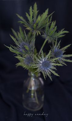 flowers - happy sunday 79ideas