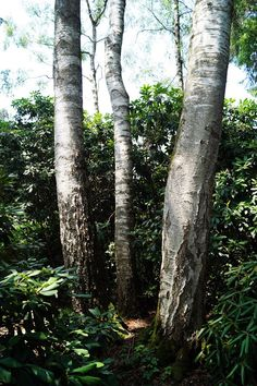 Park Seleger Moor, czyli czy warto zapłacić za kontakt z naturą?