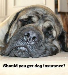 Should you consider dog health insurance? | DogVills