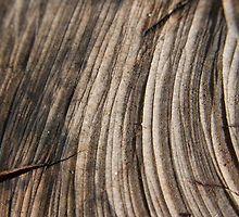 Dark wood by Sophie Watson Dark Wood, Art Work, Texture, Crafts, Photography, Image, Artwork, Surface Finish, Work Of Art