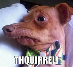 Funny Dog Pictures with Captions   Funny Dog Captions - Thquirrel Squirrel