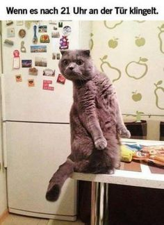 Funny Memes Animals Hilarious Lol 55 Ideas For 2019 Funny Animal Memes, Funny Animal Pictures, Funny Animals, Cute Animals, Funny Memes, Animal Jokes, Animal Pics, Haha Funny, Funny Cute