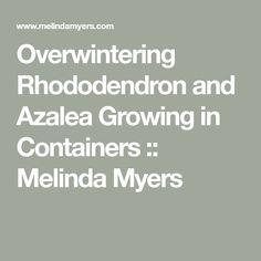 Overwintering Rhododendron and Azalea Growing in Containers :: Melinda Myers Overwintering, Low Lights, Indoor Plants, Container, Garden, Inside Plants, Garten, Lawn And Garden, Gardens