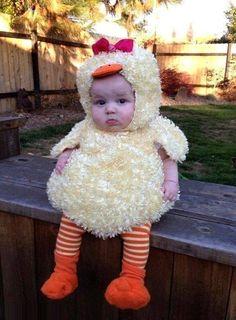 el pollito mas lindo del mundo