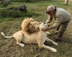 Africa Continent, Travel Flights, He Is Able, Predator, Big Cats, Continents, Lions, South Africa, Teddy Bear