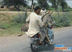 Servizio trasporto asini - http://www.funnydrivers.it/sicurezza/servizio-trasporto-asini/