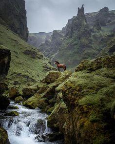 Iceland 🐴 🌿 📸 liga.liepinaa