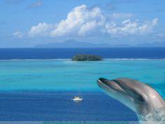 magnifik fond d'écran de dauphin