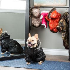 Now, I think the dogs would look adorable in these. The kids aren't so sure... http://www.overstock.com/5925180/product.html?CID=245307