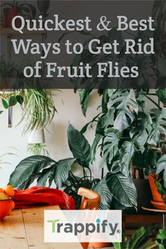 There are several ways to get rid of them, but this post is for you if you need a quick solution. In this article, we go over the quickest way to get rid of fruit flies – from best to good. Indoor Vegetable Gardening, Organic Gardening Tips, Hanging Plants, Indoor Plants, Fruit Flies, Fly Traps, Wash N Dry, Pest Control, House Plants