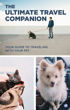 Safety tips for traveling with pets.