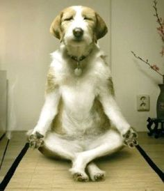 Zen dog likes to meditate (Pic) | Chuba & Company