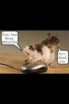 Silly mice