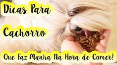 Dicas de Adestramento P/ Cachorro  Que Faz Manha/Charme/Birra/Pirraça Na...