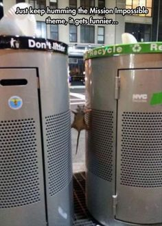 This poor fella was stuck in the holes of two recycling bins on the street, looks like the classic scene of Mission Impossible.