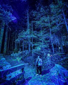 Whister's Vallea Lumina In BC Is Officially Lighting Up The Forest This Weekend - Narcity Hiking Trips, Light Trails, Whistler, Summer Nights, Alice In Wonderland, Walks, Light Up, Vacations, Places To Go