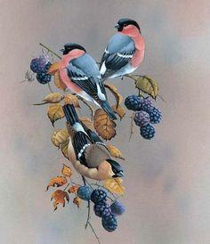 bird art by Ruud Weenink Bird Houses Painted, Tropical Birds, Bird Illustration, Bird Drawings, Bird Pictures, Vintage Birds, Little Birds, Wildlife Art, Bird Prints