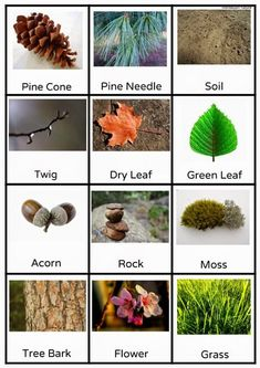 Free Outdoor Scavenger Hunt Printable by Anastasia from Montessori Nature at Childhood 101 Gross Motor Activities, Nature Activities, Gross Motor Skills, Montessori Activities, Autumn Activities, Preschool Activities, Therapy Activities, Physical Activities, Outdoor Education