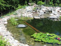 Natural pool or has they are sometimes known Natural swimming ponds. Swimming Pool Pond, Natural Swimming Ponds, Natural Pond, Swimming Pool Designs, Jacuzzi, Pool Water Features, Backyard Water Feature, Pond Design, Beautiful Pools