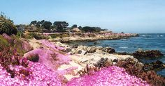 Pacific Grove, CA - Aug 2007, June 2000 - Explore the World with Travel Nerd Nici, one Country at a Time. http://travelnerdnici.com