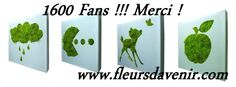 La photo du couverture des 1600 Fans via Fleurs d'avenir => https://www.facebook.com/Fleursdavenir