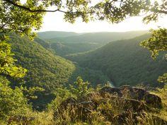 Forest near the village Hnanice - Znojmo> CZECH REPUBLIC. National Park - Podyjí. Czech Republic, National Parks, River, Outdoor, Outdoors, Outdoor Games, The Great Outdoors, Bohemia, Rivers