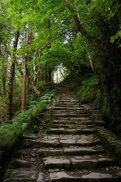 Steps Into the Woods - Killarney, Ireland This looks so pretty.  I am ready to go! But I may not want to come back,,  lol