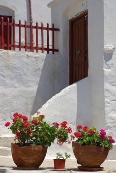 ☼ Σπετσες - Spetses ☼ λουλουδακια μες τη γλαστρα ετσι ομορφα κι απλα… source: greecephoto.gr