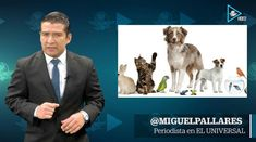#VIDEO Mexicanos alimentan mercado de mascotas #EconomíaUniversal