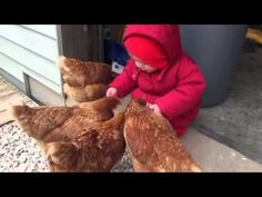 This Video Of A Little Girl Face-Planting While Feeding Chickens Is Just Too Much