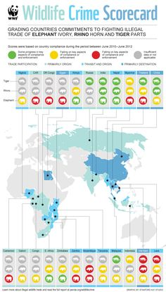 Wildlife crime infographic showes where tigers, rhino's and elephants are most threatened by poaching & who is buying