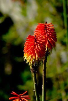 Flower power Classic Portraits, Kwazulu Natal, Botanical Gardens, Hibiscus, Flower Power, Followers, Dandelion, Coast, Plants