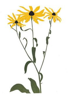 Maryland Floral Emblem: Black Eyed Susan