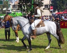 Tordillo Plateado Argel- crioulo Horse Armor, Horse Gear, Campolina, Horse Adventure, Horse Costumes, Horse World, Palomino, Horse Breeds, Wild Horses