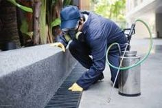 Strike Pest Control where we provide Pest Control Services which includes Green Pest Management and also Low Toxic Material at Clovis Fumigation Services, Pest Control Services, Pest Inspection, Best Pest Control, Pest Solutions, Pest Management, Bed Bugs, Types Of Plants, Organic Gardening