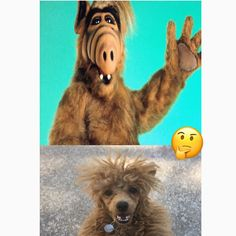 Resemblance? Yes or No? Comment Below . . . .  Follow us and use #DressMyPup Or @DressMyPup To Be Featured . Tag Your Friends . . #dog #Pooch #puppy #mydog #mydogiscutest #cutedogs #funnydogs #DressMyPup #dogs_of_instagram #pet #pets #puppies #dogs #petstagram #petsagram #dogsitting #photooftheday #dogsofinstagram #ilovemydog #instagramdogs #nature #dogstagram #dogoftheday #lovedogs #lovepuppies #yorkies #adorable #doglover #instapuppy #DogClothes