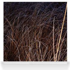Dark Grass Textured Wallpaper, Grass, Herbs, Wallpapers, Dark, Wall Papers, Herb, Wallpaper, Tapestries