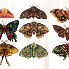 Moth Wings Iii Coffee Mug by Angela Rizza - 11 oz Art Journal Inspiration, Tattoo Inspiration, Art Inspo, Wing Tattoos On Back, Back Tattoo, Love Tattoos, Tatoos, Paper Butterflies, Butterfly