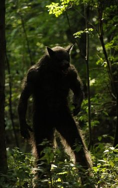 the dogman often referred to as the michigan dogman for its initial sighting was first