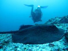 Isla del Coco: Costa Rica's ultimate dive destination | Cayuga Sustainable Hospitality