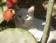 Ghost est un chat indépendant qui ne cherche pas le contact humain d'où une adoption plutôt difficile à entrevoir.  Mais toute proposition reste à étudier… Le top étant une vie de « chat libre » dans un endroit sécurisé.  SOS Chats de l'Hopital  29, bd de la Jetée  66140 CANET EN ROUSSILLON  Tel. : 09 50 55 60 98