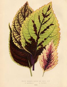 Public Domain Tropical Leaves! - The Graphics Fairy