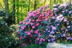Flower Seeds, Czech Republic, Lilac, Park, Nature, Flowers, Plants, Gardening, Unique