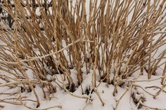 Snow cover is a bonus that provides a blank canvas for your imagination as well as insulation for your plants.