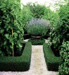 I am in the process of designing a parterre for our front yard. It is the perfect solution to replace our lawn. Formal Gardens, Small Gardens, Outdoor Gardens, Boxwood Garden, Boxwood Hedge, Boxwood Planters, Garden Paths, Garden Landscaping, Garden Hedges